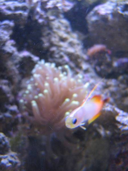 Firefish with Torch
