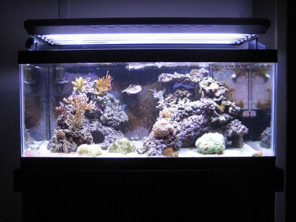 40 Gallon Breeder - Full Tank Shot 2008-11-03